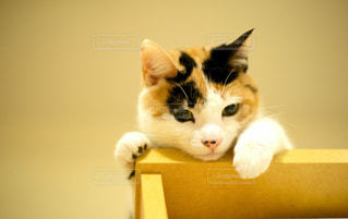 猫の写真・画像素材[285999]