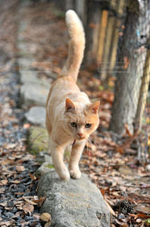猫の写真・画像素材[312418]