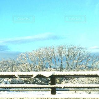 自然の写真・画像素材[321801]