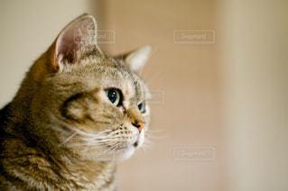 猫の写真・画像素材[344678]