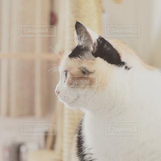 猫 - No.357338