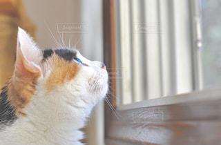 猫の写真・画像素材[391117]