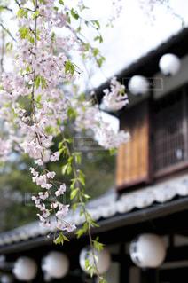春の写真・画像素材[393955]