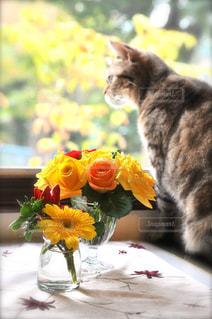 猫の写真・画像素材[396875]