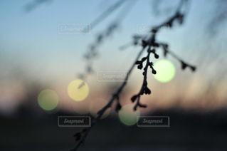 空の写真・画像素材[420771]