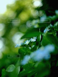 花の写真・画像素材[560084]