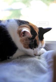 猫の写真・画像素材[560089]
