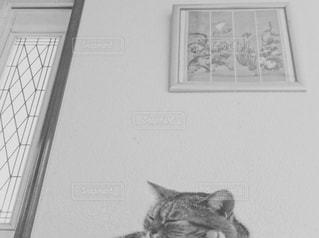 猫の写真・画像素材[582267]