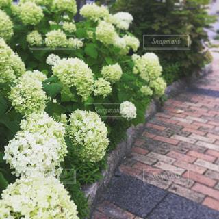 花の写真・画像素材[589738]