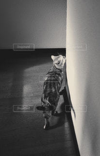 猫の写真・画像素材[591555]