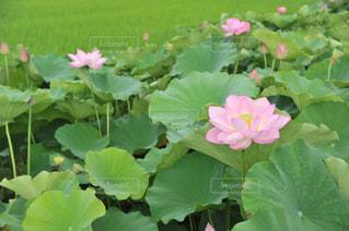 花の写真・画像素材[605507]