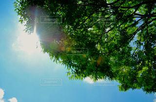空の写真・画像素材[615862]