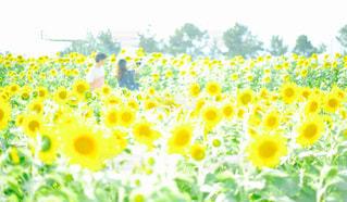 花の写真・画像素材[659897]