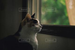 お気に入りの窓の写真・画像素材[799589]