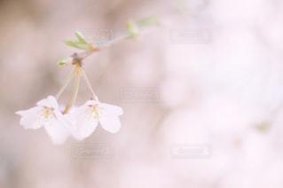 春の日差しを受けての写真・画像素材[1147687]