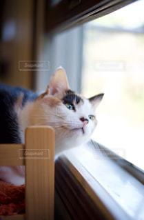 窓の前に座っている猫の写真・画像素材[1636009]