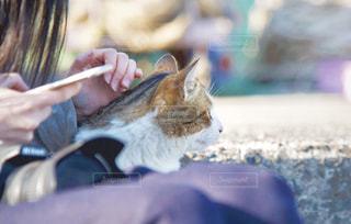 近くに猫ちゃんが…♡の写真・画像素材[1799301]