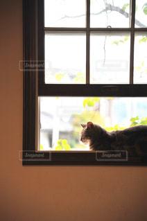 猫のくつろぎタイムの写真・画像素材[2714596]