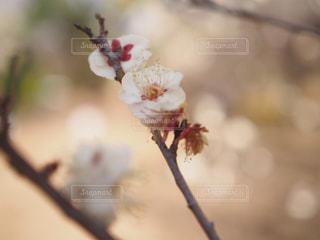 自然の写真・画像素材[289266]