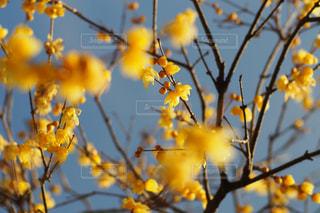 花の写真・画像素材[337617]