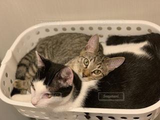 かごの中に座っている猫の写真・画像素材[2444387]