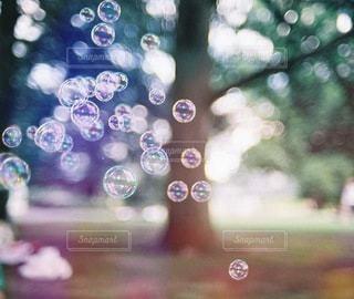 シャボン玉のの写真・画像素材[3912]