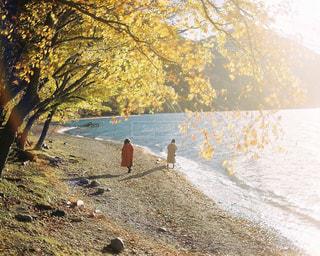 中禅寺湖と紅葉の写真・画像素材[259943]