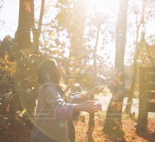 秋の光に透ける落ち葉の写真・画像素材[261073]