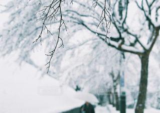 雪の日の写真・画像素材[288144]