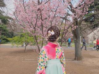 初春と着物の女性の写真・画像素材[301420]