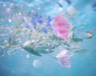 水中の花束の写真・画像素材[627717]