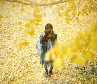 黄色いじゅうたんとカメラ女子の写真・画像素材[922687]