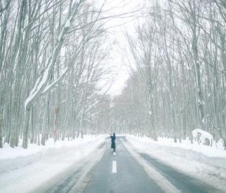 雪に覆われた道の写真・画像素材[932038]