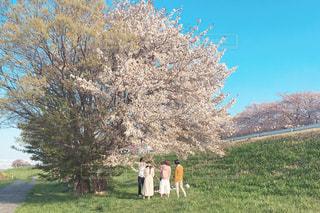 木の隣に立っている人の写真・画像素材[1101866]