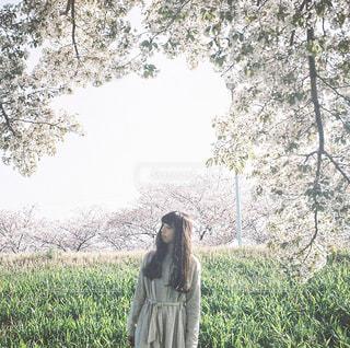 桜と女性の写真・画像素材[1189337]