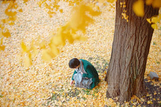 イチョウの木の下の女性の写真・画像素材[1529631]