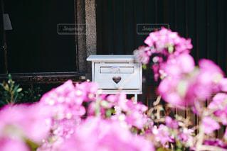 ピンクの花とハートのポストの写真・画像素材[1529636]