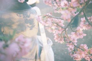 桜と影の写真・画像素材[1842506]
