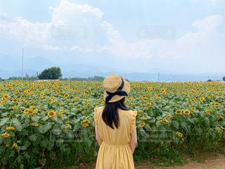 ひまわり畑と夏の写真・画像素材[2451464]