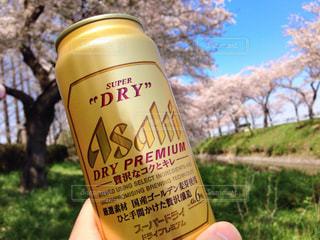 桜の写真・画像素材[281802]