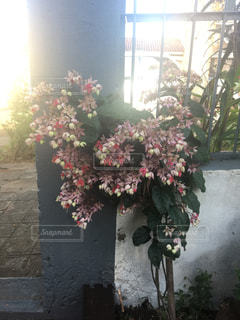 花の写真・画像素材[281711]