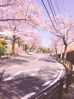 桜の写真・画像素材[412906]
