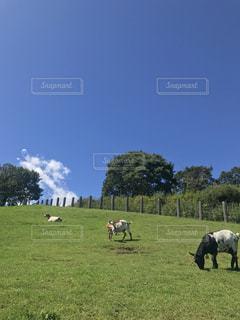 高原の牧草地の写真・画像素材[750739]