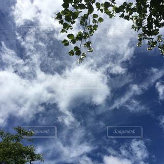 森林の写真・画像素材[146678]