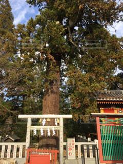 神社の写真・画像素材[300386]