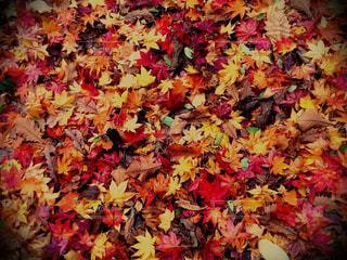 秋の写真・画像素材[281898]