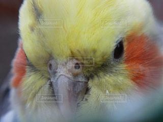 鳥の写真・画像素材[283099]