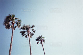 自然の写真・画像素材[282047]