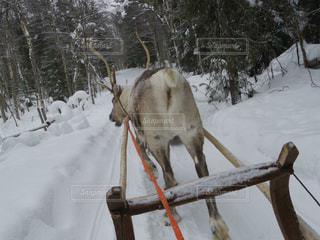 冬の写真・画像素材[282012]