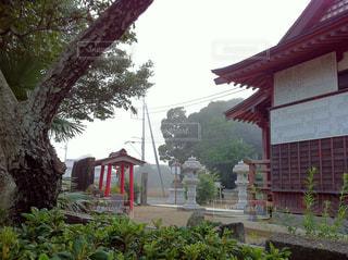 朝霧の境内の写真・画像素材[331440]